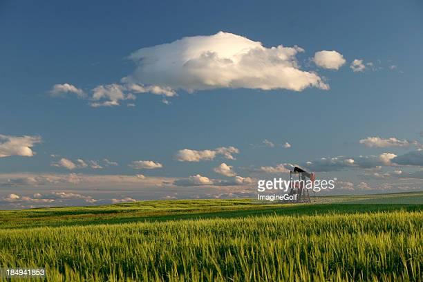 Oil Field and Pumpjack in Alberta