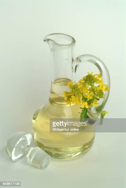 Oil Made Of Brassica Rapa Field Mustard Bird Rape Keblock and Colza or Rape Seed Food Medicinal Plant Crop Plant
