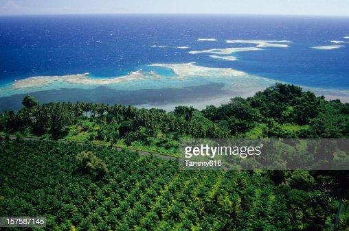 Oil Palm Plantation, WNBP