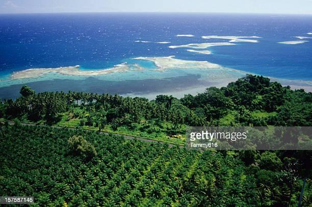 Palmier à huile Plantation, WNBP
