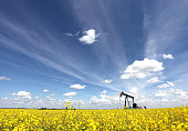 A pumpjack in a canola field. The oil industry is a major economic force in Alberta. This oil rig is located in an oil field near Calgary. Drilling rigs first drill a well and then the pumpjack is sit