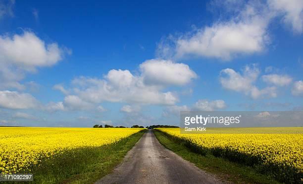 Oil seed rape fields