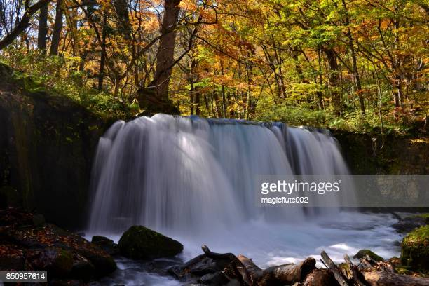 秋、青森県の奥入瀬渓流