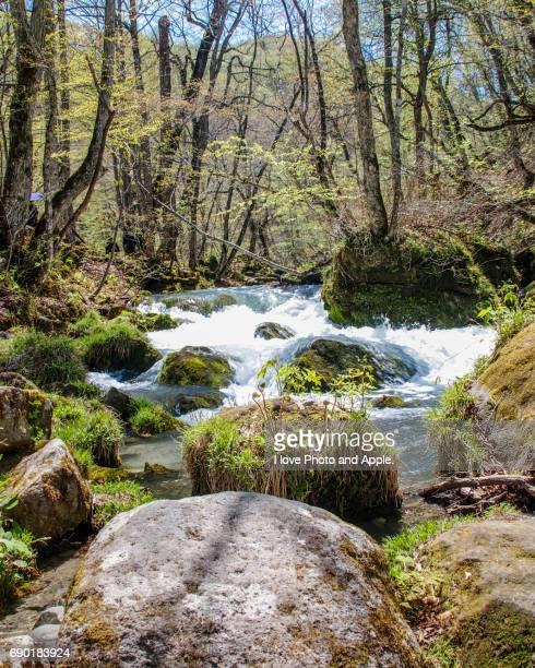Oirase spring scenery