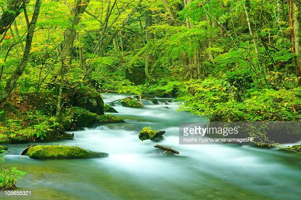 Oirase Stream Flowing Through Towada Hachimantai National Park. Towada, Aomori Prefecture, Japan
