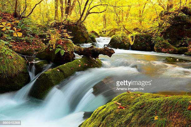 Oirase Stream in autumn