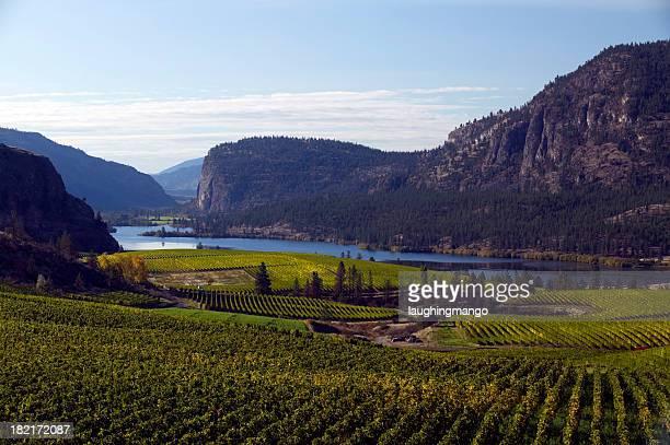 okanagan valley vineyards  penticton british columbia
