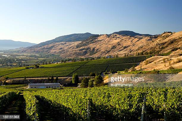 okanagan valley winery vineyard