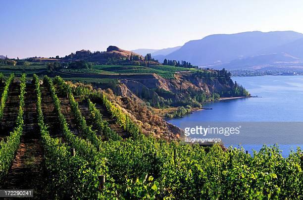 okanagan vineyards winery malerischen