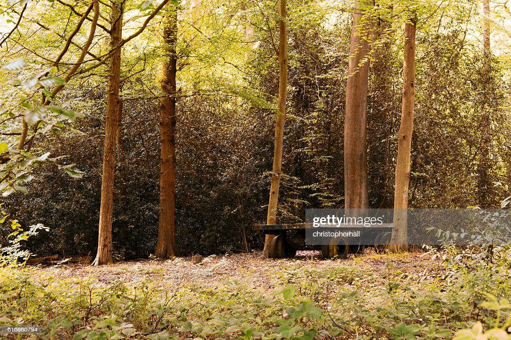 Old abandond trailer left in the woods : Stock Photo
