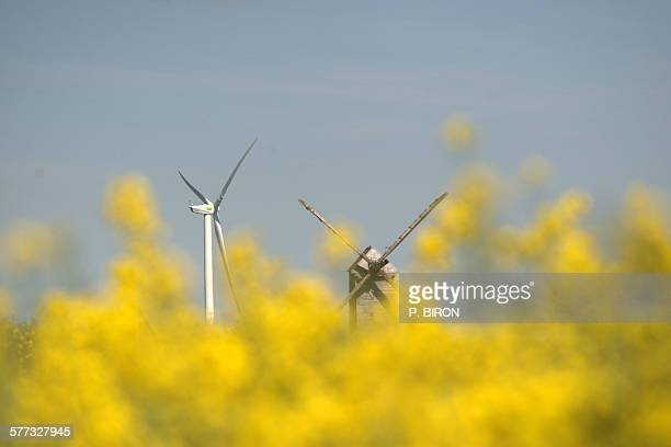 Old and new windmills in rape fields