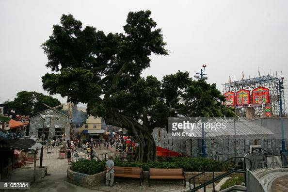 A old banyan is seen at the venue of Bun Festival on Cheung Chau island May 11 2008 in Hong Kong China The 2008 Cheung Chau Bun Festival Grand Parade...
