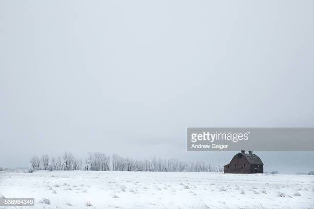 Old barn and frosty trees in snowy landscape.