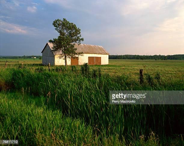Old barn in field, Mirabel, Laurentians, Quebec, Canada