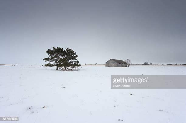 Old barn on snowy landscape, Saaremaa, Estonia