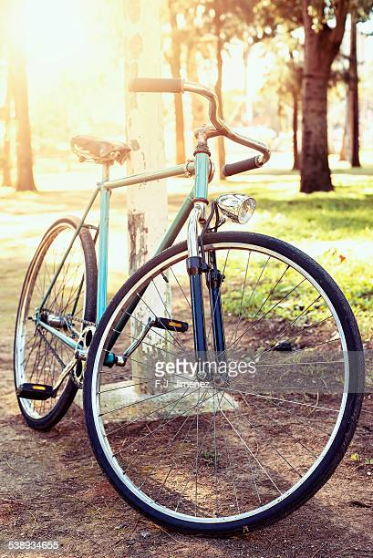 Old bicycle in the park, while nearly evening.