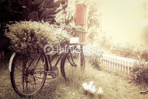 Old Bicycle With Flower In Garden Vintage Color Tone Stock Photo