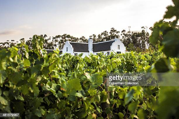 Old Cape Dutch Manor House Accommodation and Leisure at Rijk's Country Lodge and Wine Estate With Beautiful Landscape View of Vine Leaves At the Cape...