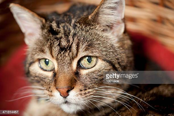 """old cat """"Pedro"""""""