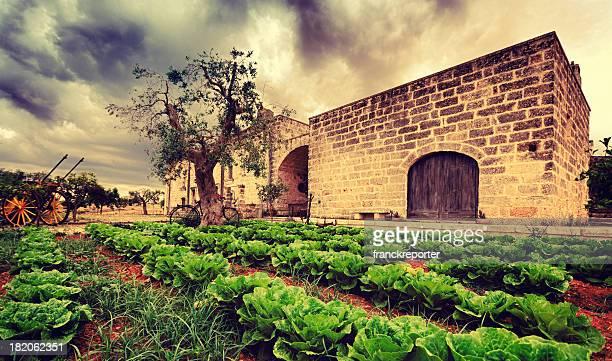 Old classic farm masserie in Salento - Italy