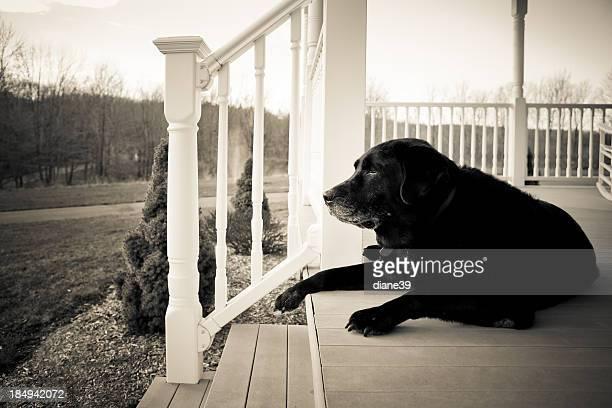 旧犬のフロントポーチ