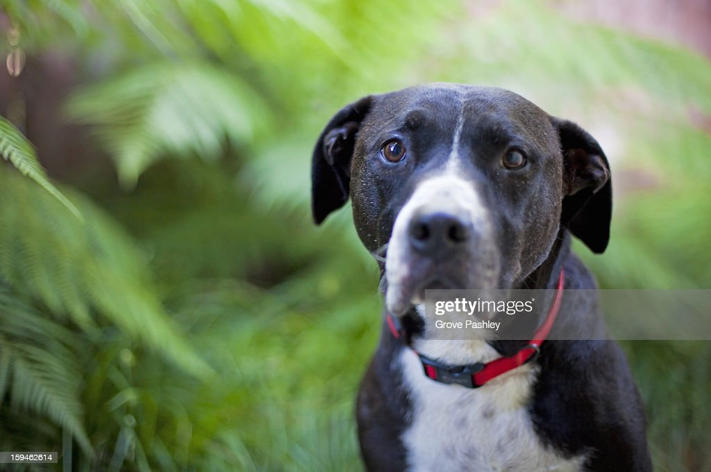 Old dog portrait : Stock Photo