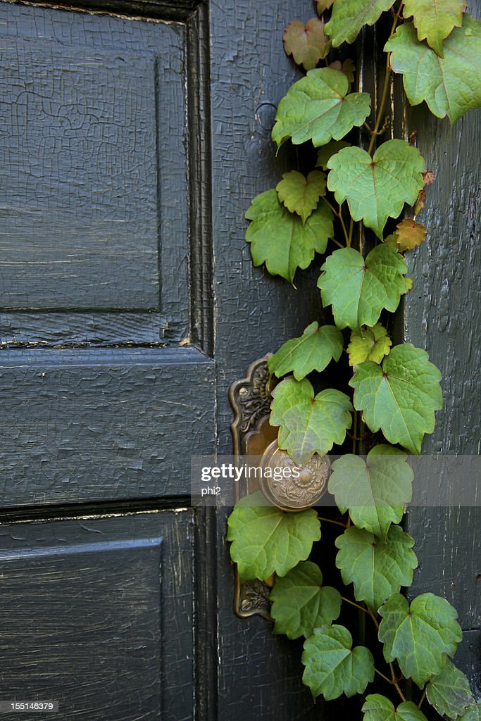 Old Door with Vine Grows On It