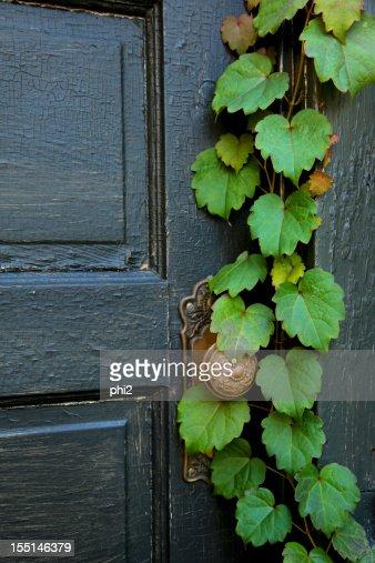 Old Door with Vine Grows On It
