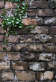 Old grunge natural bricks (blocks) textured stone background with a green plant growing on it eco concept image.