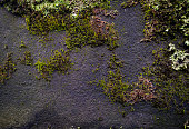 Old grunge textured stone wall background with a green moss growing.