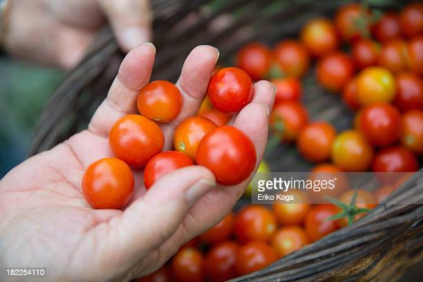 Old Lady Taking Cherry Tomato