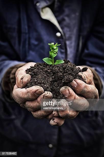 Alter Mann hält neues Wachstum-Hände Nahaufnahme