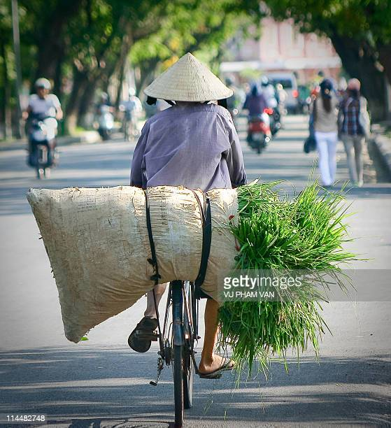 Old man loading grass on his bike