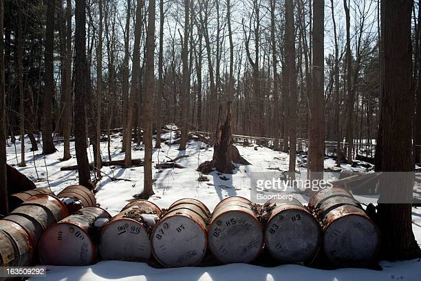 Old metal barrels once used to hold maple syrup sit amongst the Maple trees at Richards Maple Products in Chardon Ohio on Saturday March 9 2013 Grade...