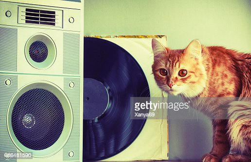 Old music speaker in foreground, red cat and record : Stock Photo