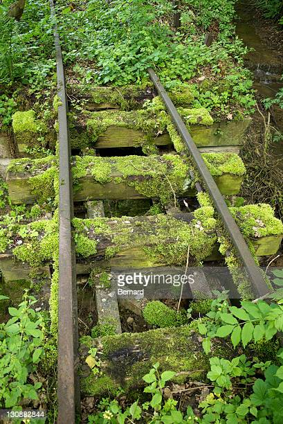 Old narrow-gauge railway tracks overgrown with moss and plants