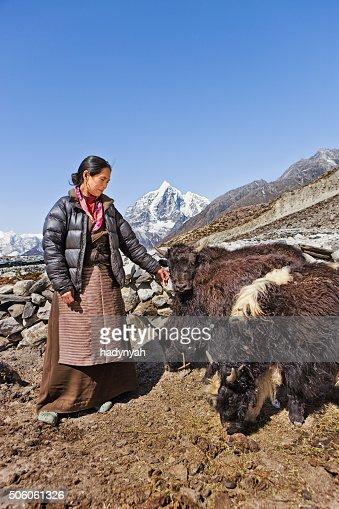 Old Nepali woman hearding yaks