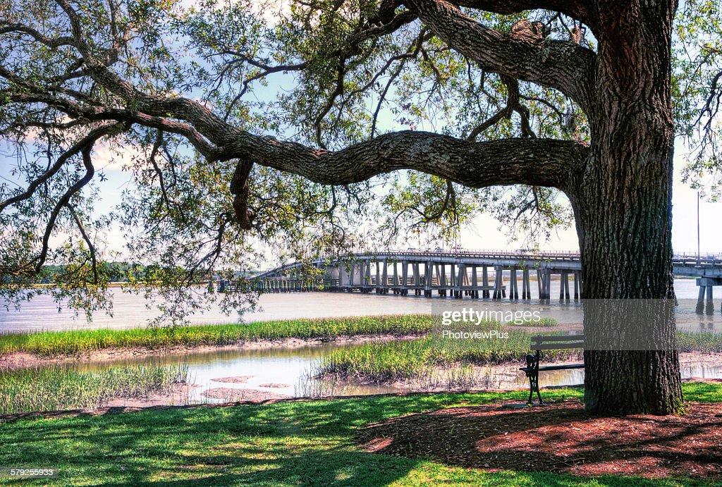 Old Oak by the Riverside