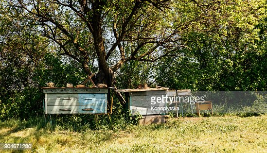 Old overgrown spring garden and old rustic garden furniture : Stock Photo
