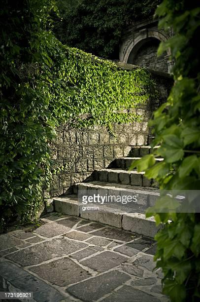 Escaliers en pierre vieux Envahi par la végétation