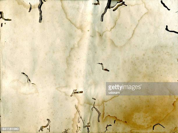 Old paper affected by paper louse