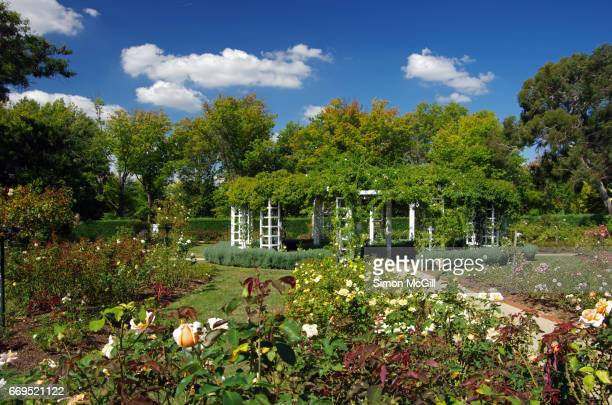 Old Parliament House's House of Representatives Rose Gardens, Parkes, Canberra, Australian Capital Territory, Australia