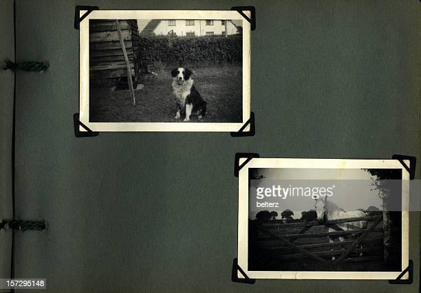 old photo album pet page