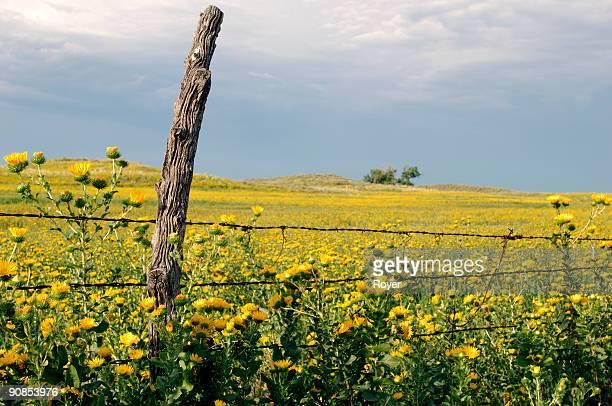 Old post, prairie flowers & fence
