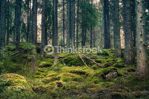 Viejo bosque con agradables luces y sombras : Foto de stock