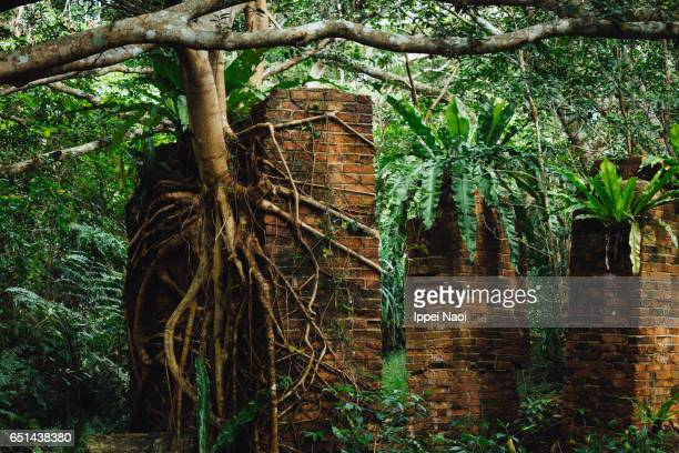 Old ruin taken over by jungle