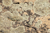 Old stone surface covered with blue lichen. Natural beautiful stone texture with mould