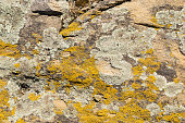 Old stone surface covered with yellow lichen. Natural beautiful stone texture with mould