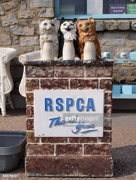Old style RSPCA collection box in the shape of three cats with milk bottles on a wall Lyme Regis Dorset UK