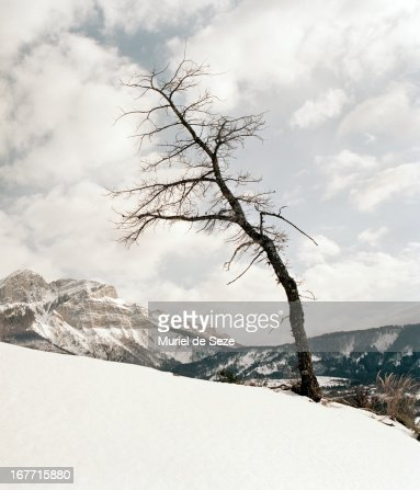 Old tree in snowy landscape : Stock Photo